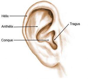 Anatomie oreille décollée
